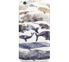 More whales iPhone Case/Skin