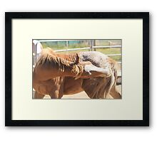 Bet you can't do this Framed Print