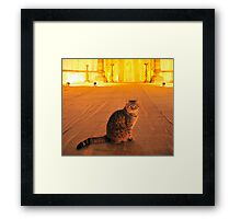 Cat n.12 Framed Print