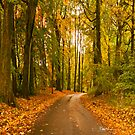 Road Through The Tall Trees by Stephen Knowles