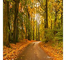 Road Through The Tall Trees Photographic Print