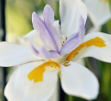 Bloom by Karen E Camilleri