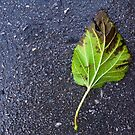 Leaf on Road by Steve Outram