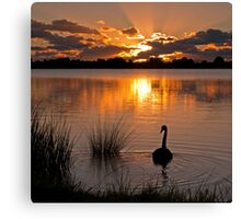 Swan at sunset Canvas Print