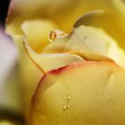 Red Tipped Yellow Rose by Joy Watson