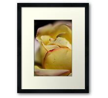 Red Tipped Yellow Rose Framed Print