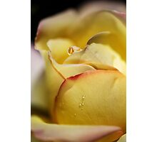 Red Tipped Yellow Rose Photographic Print