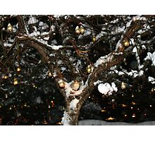 A Partridge in a Pear Tree Photographic Print