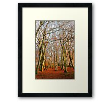 Sunny Winter Trees Framed Print