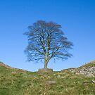 Sycamore Gap by HAPhotography