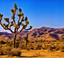 Joshua Tree by Kathy Weaver