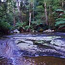Liffey Falls at Dawn #3 Tasmania Australia by spyke