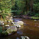 Dawn at Liffey Falls #2 Tasmania Australia by spyke
