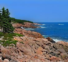 Rocky Shore by Donald  Stewart