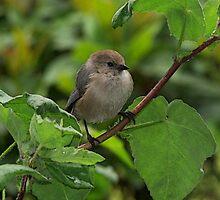 My Backyard Bird by DorotheaK