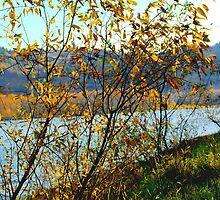 River Bank by kendlesixx
