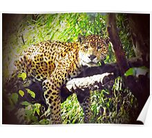 Jaguar! Poster