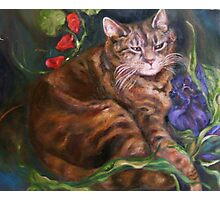 The Cat Who Loved Flowers Photographic Print