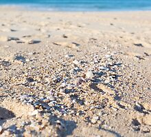 Shells at the beach by Aamie