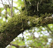 Moss by KayleeRose