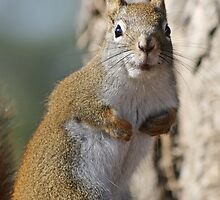 Ok fess up, who stole my nuts? by Heather King