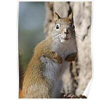 Ok fess up, who stole my nuts? Poster