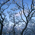 Snowy Tree by TinaGraphics