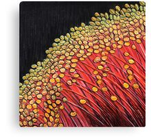 Square - Pastels - Christmas Eucalyptus Canvas Print