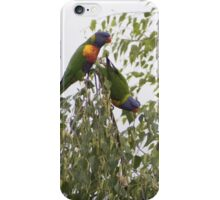 rainbow lorikeets resting place iPhone Case/Skin