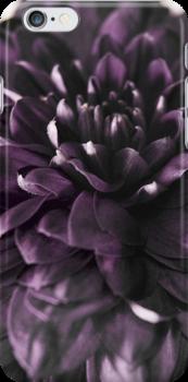 chrysanthemum by versutia