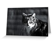 Hunting cat Greeting Card