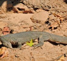 Crocodile, Fitzroy River, Kimberley, Western Australia Sticker