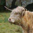 Highland cow by MattPurpleHaze