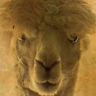 Alpaca by swaby