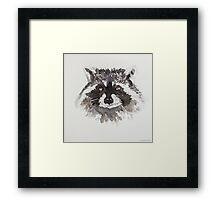 Swift Art, Raccoon Framed Print