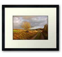 Gold in the afternoon Framed Print