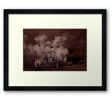 Weeping Willow In Infrared Framed Print