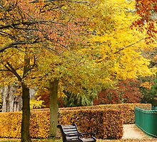 Autumn park by flashcompact