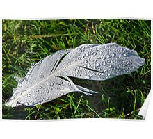 Dewy Feather Poster