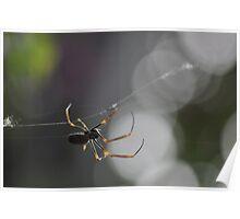 Big spider, bigger web Poster