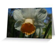 Daffodil peace Greeting Card