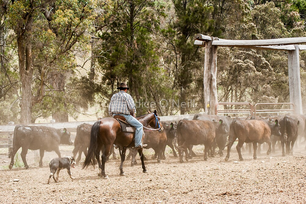 When Good Heifers Go Bad 4 by Candice O'Neill