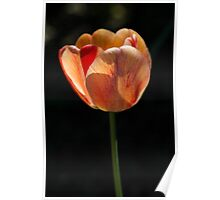 Two Lips (Tulips) Poster