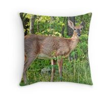 White Tail Doe Throw Pillow