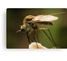 Fly Feeding Canvas Print