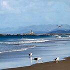 Seagulls feeding at Mangawhai Surf Beach by amypie71