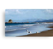 Seagulls feeding at Mangawhai Surf Beach Canvas Print