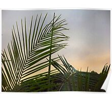 Winter sunrise through palm trees Poster