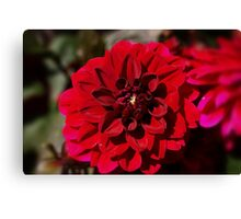 Different Shades of Red Canvas Print