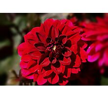 Different Shades of Red Photographic Print